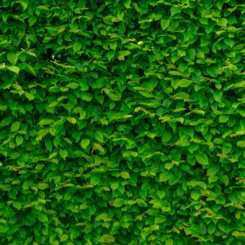 green living wall in the office